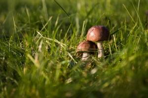 Sezon grzybowy w pełnym rozkwicie