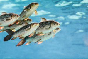 Ryby na polskich stołach